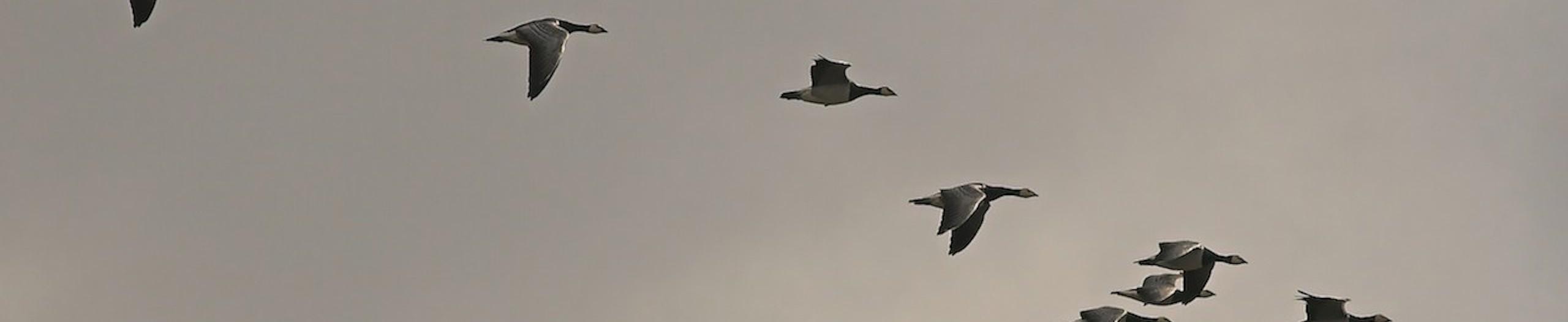 The Ornithologist's Last Wish
